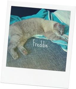 Freddie blog
