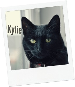 Kylie blog