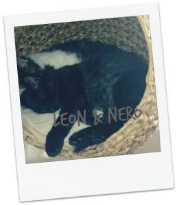 Leon und Nero blog