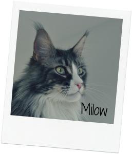 Milow blog