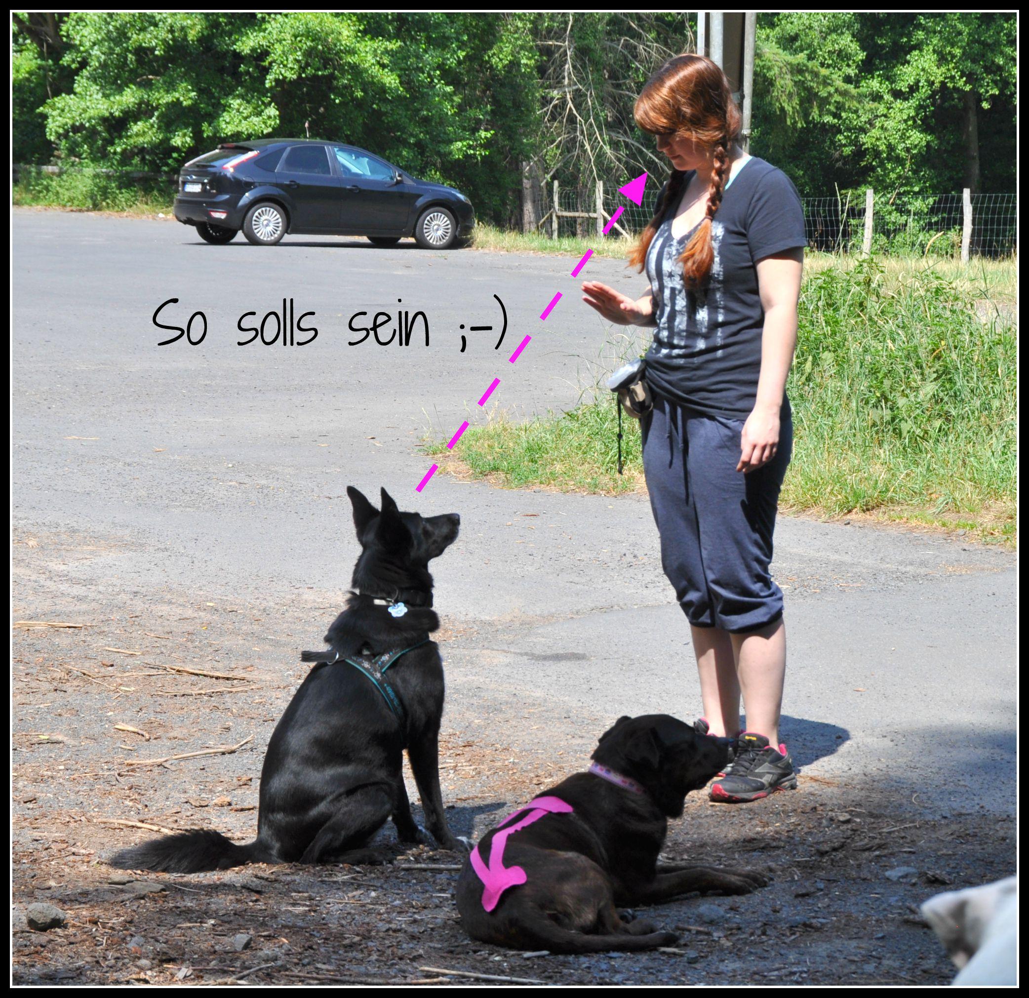 SPKE Sitz-Bleib-Übung 2