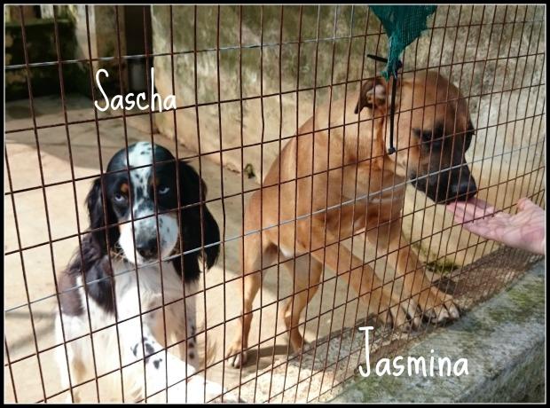 Hilfstransport Italien Sascha Jasmina