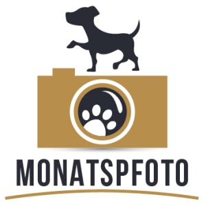 MoPfo-gold-hoch