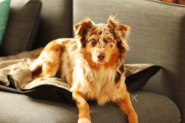 Hundedecke Zucker & Zimt Design