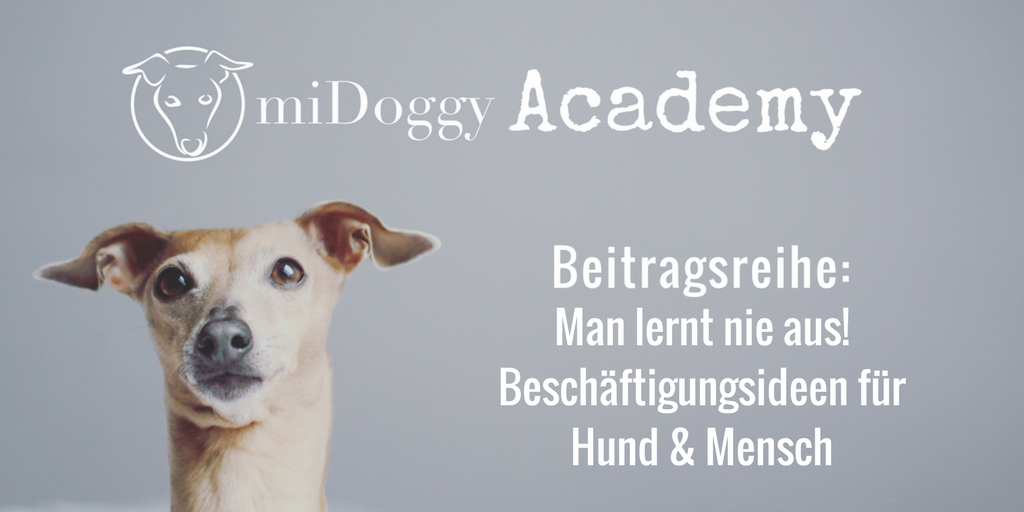 Man lernt nie aus!Beschäftigungsideen für Hund & Mensch